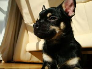 hunde pflege