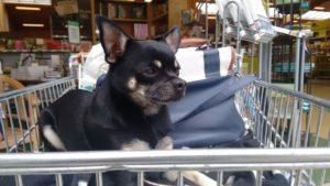 Einkaufen mit dem Hund